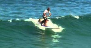Incredible-SUP-Dog-Surfing